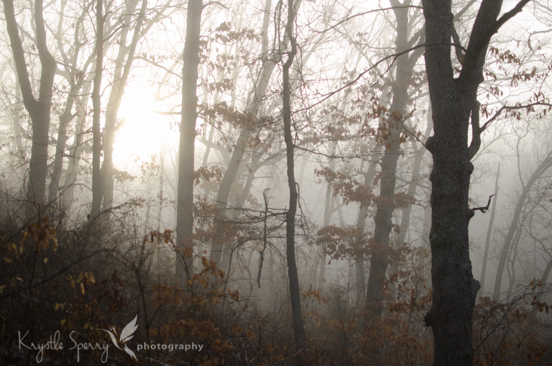 2015-365march15-1